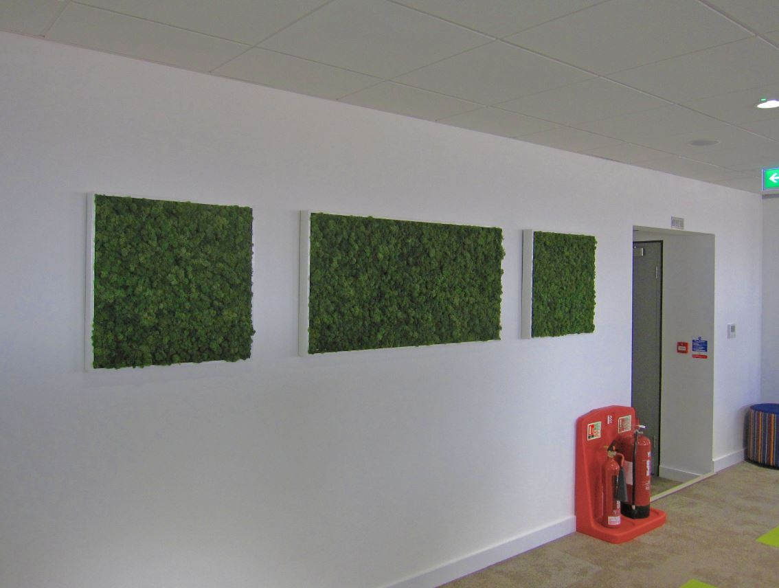 Moss pictures on the walls of birmingham city centre offices