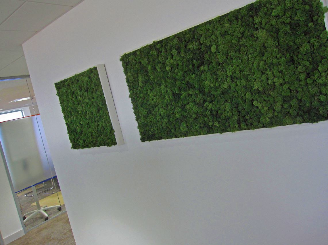 Moss walls and pictures supplied to office throughout the west midlands