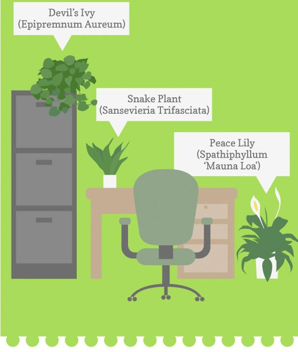 Plants help create a happy and healthy workforce