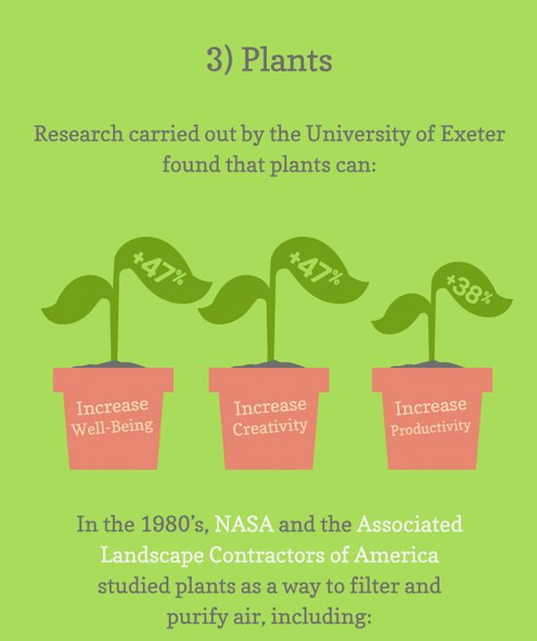 Plants help create a happy and productive workforce