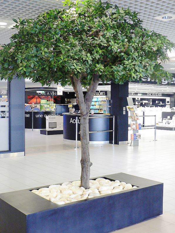 Schefflera Canopy tree with artificial foliage