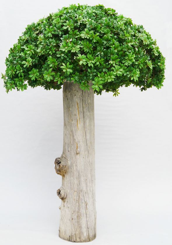 Schefflera Canopy artificial tree