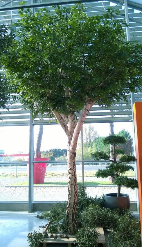 Silver birch artificial tree 4.5m