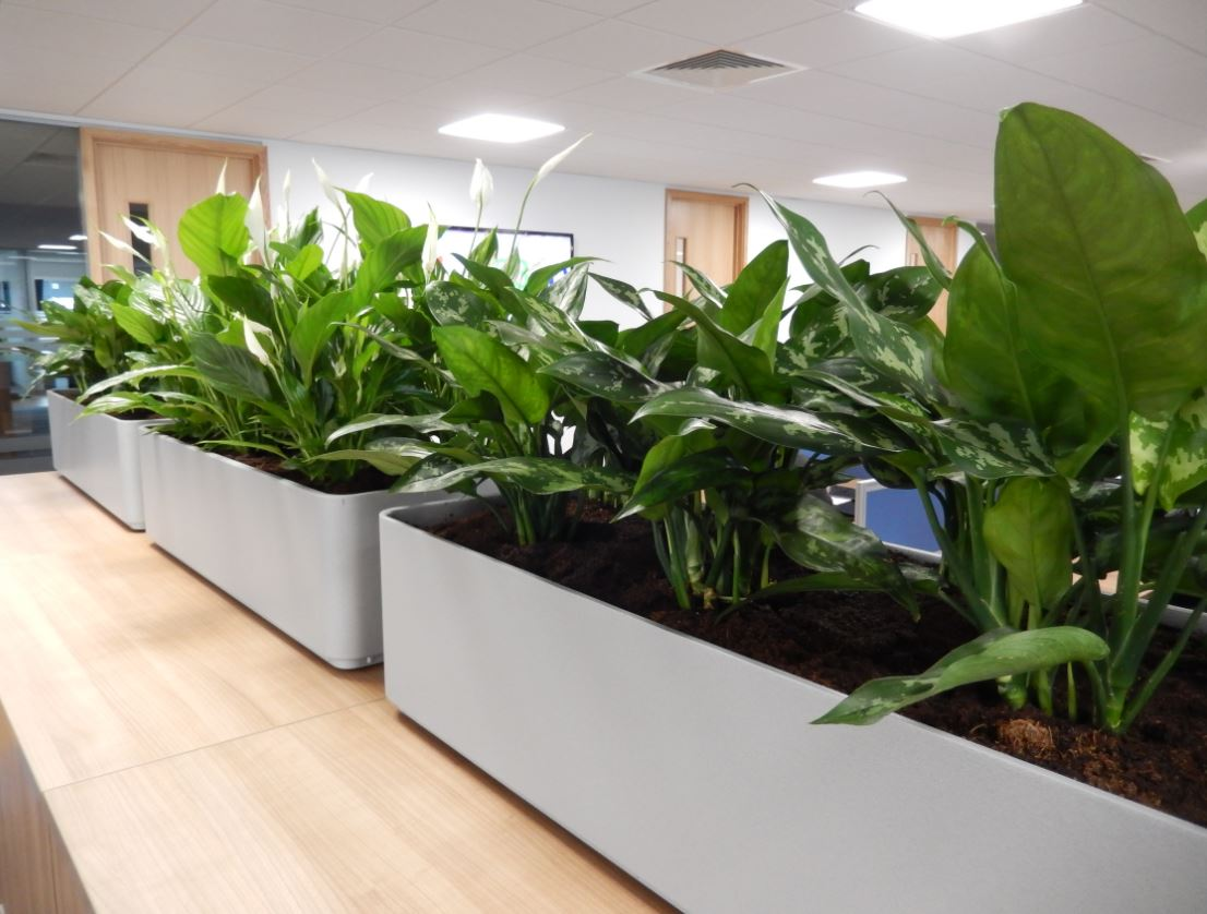 Striking plants for coleshill offices office landscapes for Cubicle planter box