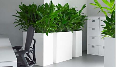 office plant displays. Contemporary White Office Plant Displays A