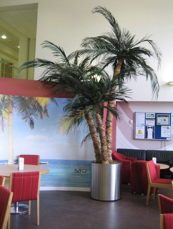 Costa Coffee Palm Tree in Stratford upon Avon