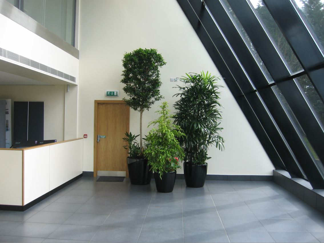 Coventry Office Atrium large group of plant displays after