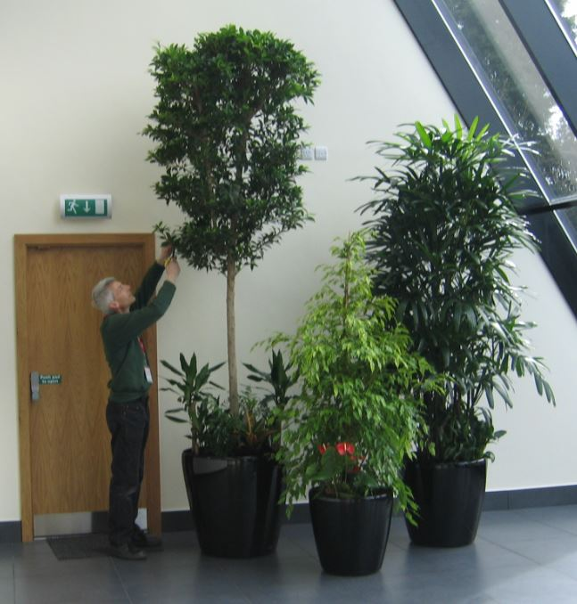 Fully maintained interior plant displays