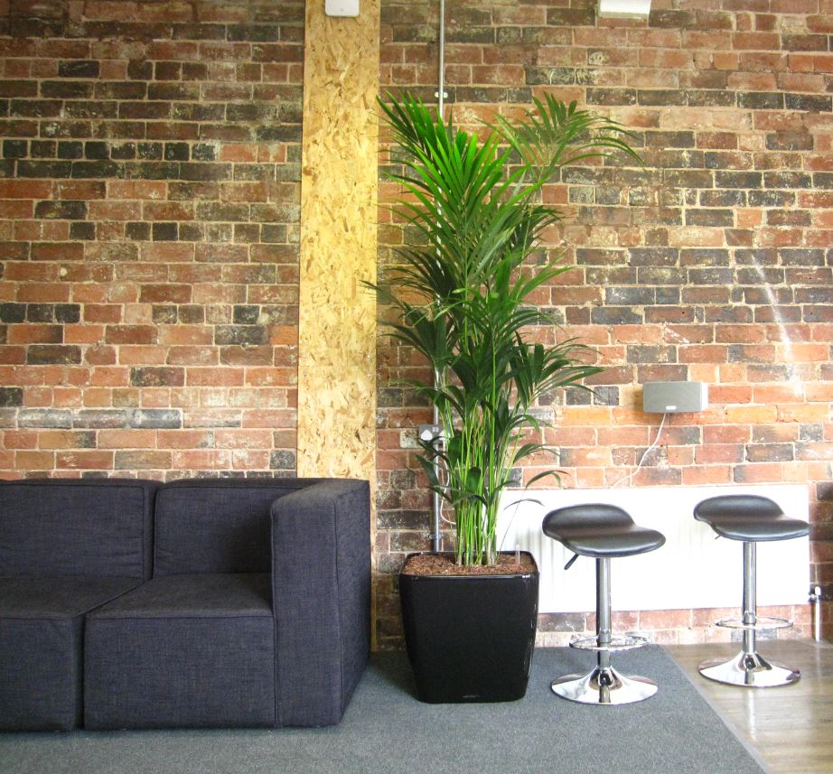 Plants improve wellbeing for office employees