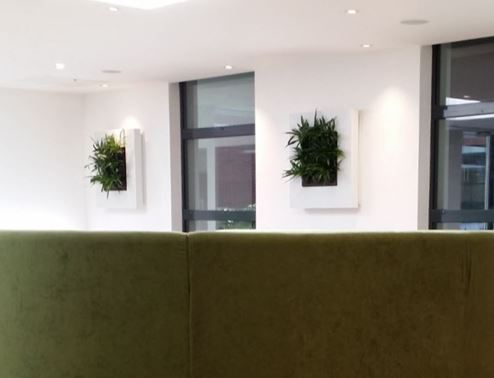 Live Plant Art in London office