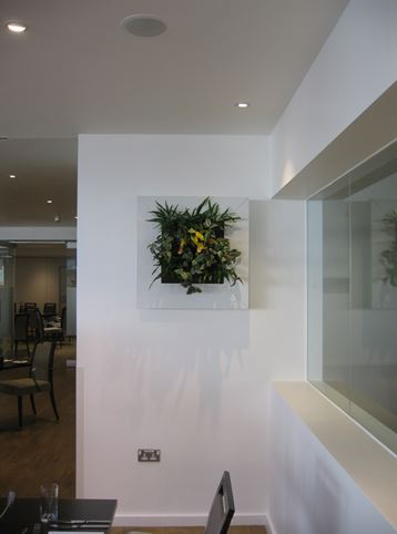 Live Plant Art in white square frame