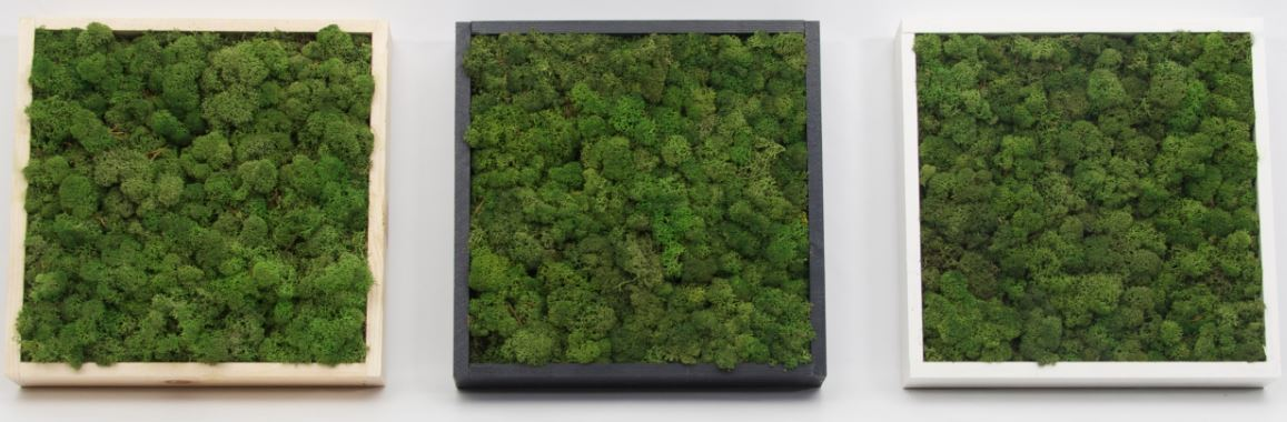 Moss Picture Frames Square
