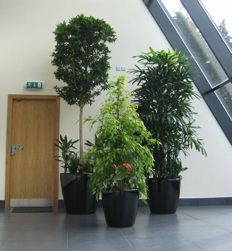 Plant displays for coventry office atrium