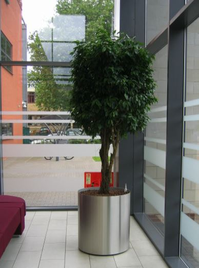 Plants for Main office Atrium at West Midlands Fire