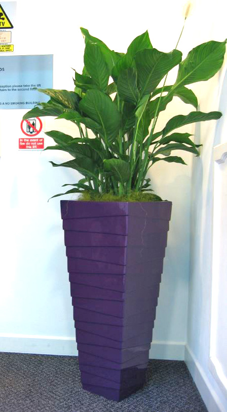Interior Stack plant displays for Leeds based legal chambers