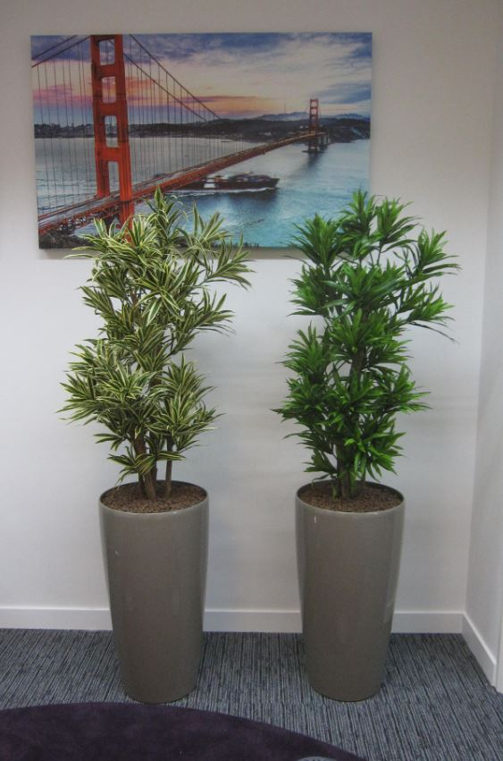 Realistic artificial plants for offices office landscapes - Tall office plants ...