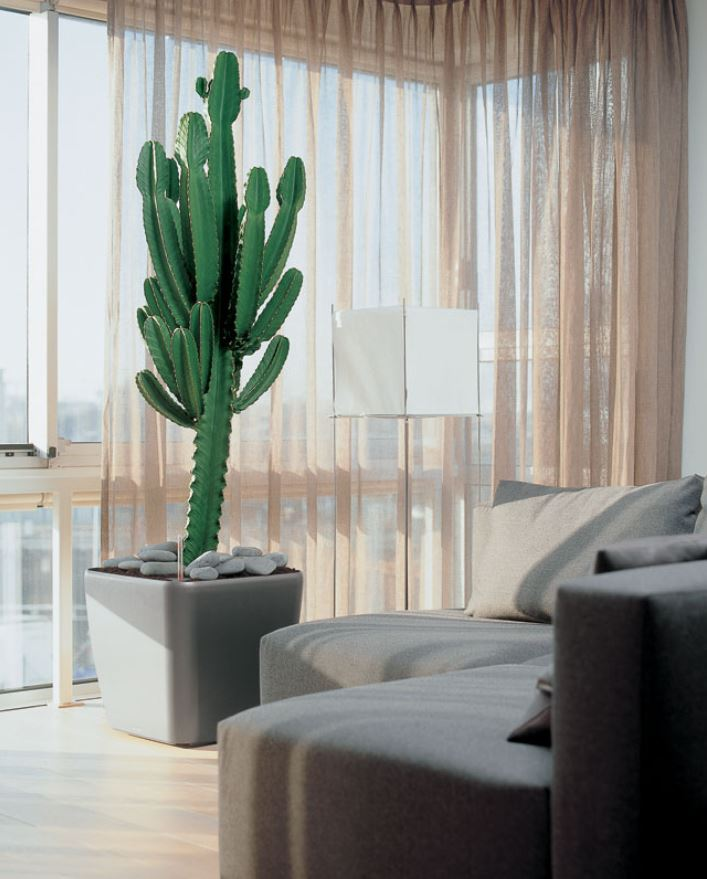 The tactful cactus by your window, surveys the prairie of your room