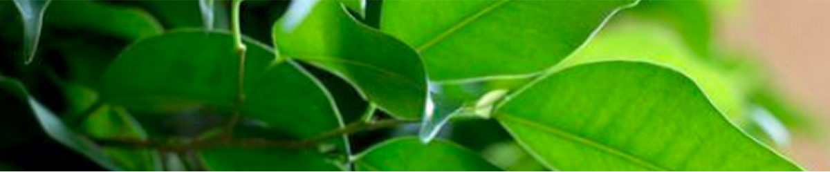 Why Plants Banner 2