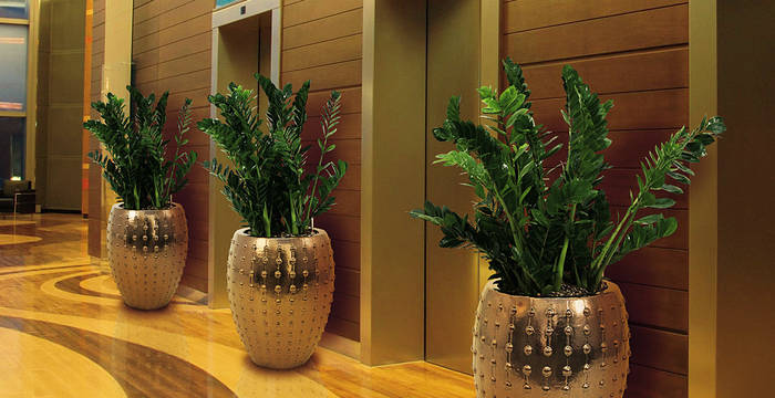 Lift Lobby With Zamiifolia Plants In Circular Gold Containers