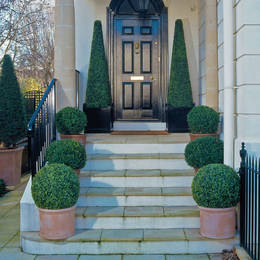 Buxus Balls And Pyramid Trees With Uv Resistant Foliage