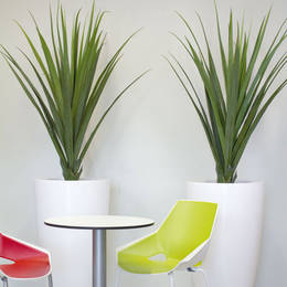 Spiky Contemporary artificial Yucca plants in tall white containers