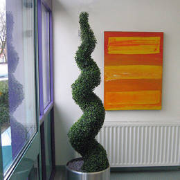 Spiral Buxus Topiary Tree in Scool Reception area