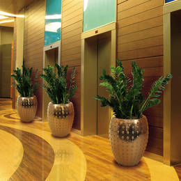 Zamiifolia Plants In Circular Gold Containers in a lift lobby area