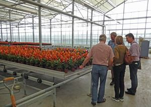 Bromeliad Nursery in Holland