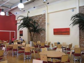4.0m Phoenix Palms add finishing touch to Restaurant.