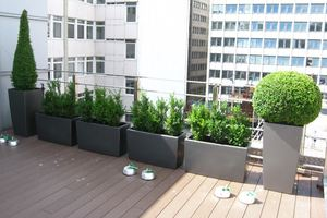 Topiary Roof Garden for city Law Firm