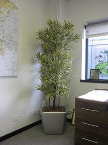 Artificial Plants for Leamington Spa offices