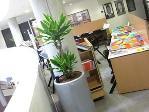 Plant Displays for Telford Academy School