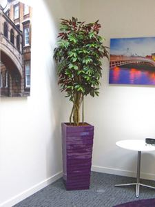 Bespoke Artificial Plant Displays