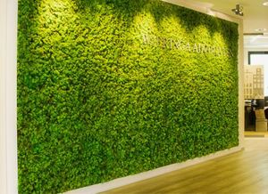 Green Office Walls