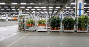 Dutch Auction & Orchid Nursery