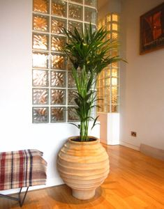 Plants for offices in Birmingham, Walsall, Coventry and Telford