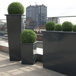 Boxwood Topiary Balls In Tall Metal Planters