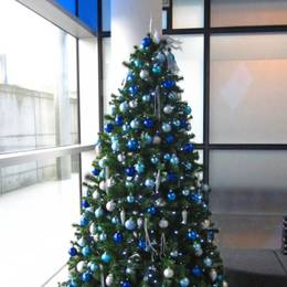 Hired Christmas Tree At Trinity Park  Solihull  Birmingham  B37 7 ES