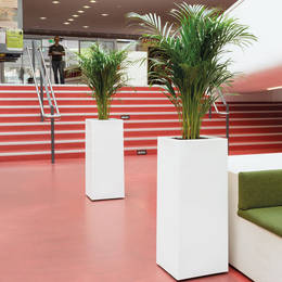 Tall White Palm Displays In Library Entrance Hall
