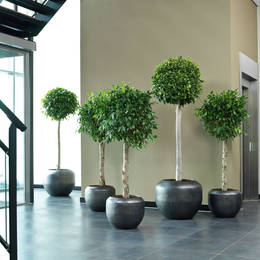 Grouped Plant Displays At Bottom Of Stairs In Office Reception