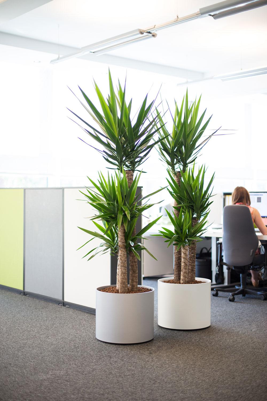 images of live office plant displays office landscapes
