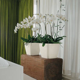 White Phalaenopsis Orchid Displays
