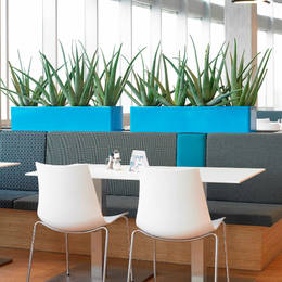 Bold Blue Restaurant Displays Planted With Aloe Vera Plants