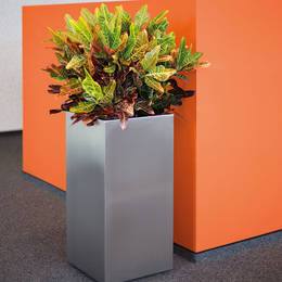 Colurful Croton Display In Tall Square Aluminium Container