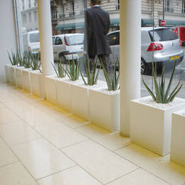 Aloe Vera Plants In The Window Of A London Office