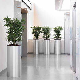 Dracaena Plants In Worcester Office Lift Lobby