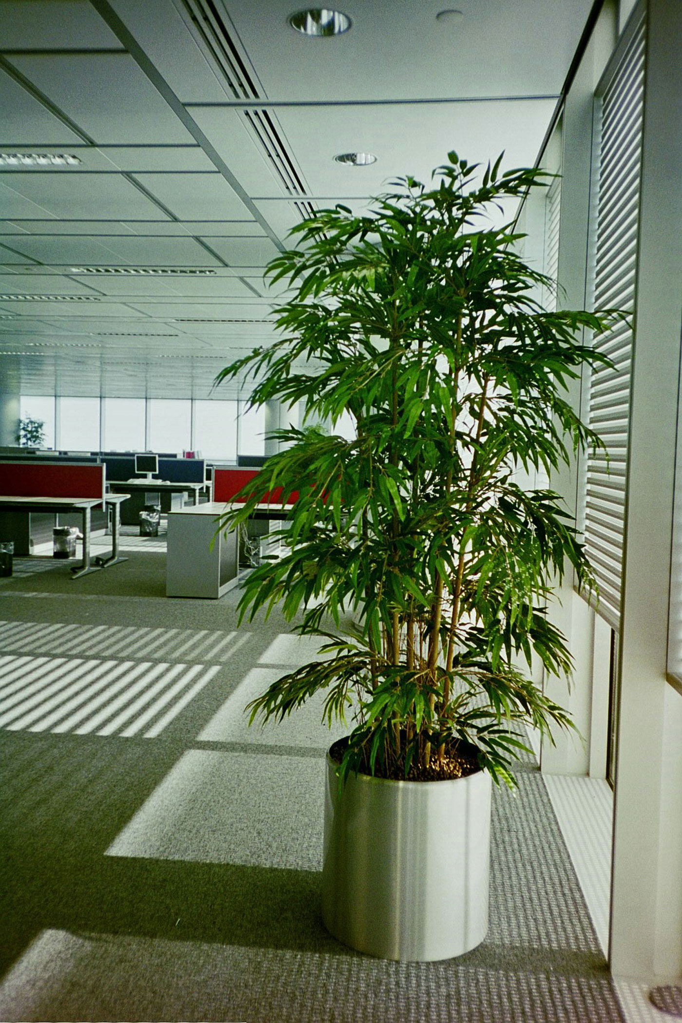 Artificial Plants For Offices Office Landscapes