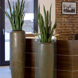 Artificial Sansiveria Plants In Office Reception