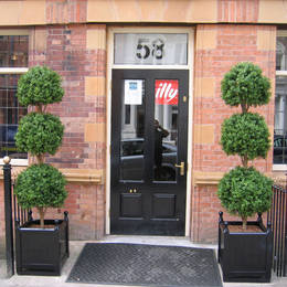 Artificial Triple Ball Topiary Tree Outside Newhall Street Cafe B3