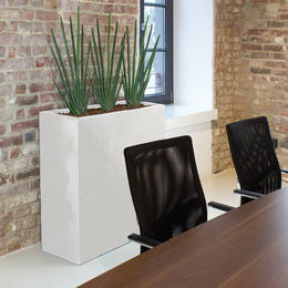 Sansevieria Cylindrica Plants In A Corporate Board Room